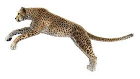 Dużego kota gepard Zdjęcie Stock