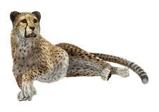 Dużego kota gepard Fotografia Royalty Free