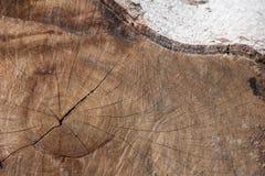 Du grand bois a été coupé Image libre de droits