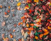 Du gravier aux feuilles photographie stock libre de droits