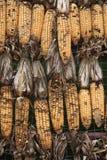 Du maïs a été endommagé Image libre de droits