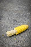 Du maïs a été mangé et est tombé à la terre Image stock