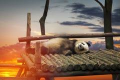 Duża panda Obrazy Royalty Free