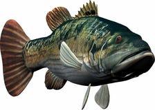 duża ryba Obrazy Stock