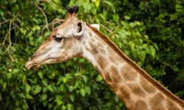 Du-siente el parque zoológico Imagen de archivo