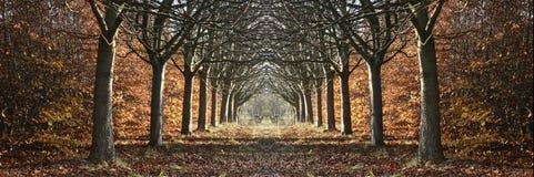 duński krajobrazu Zdjęcia Royalty Free