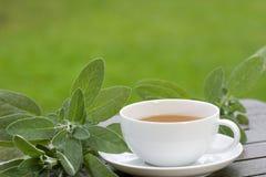 Du thé sage est servi chaud Image stock