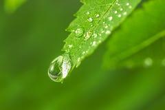 Du?a wody kropla na zielonej trawie fotografia royalty free