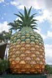 Duży ananas w Queensland Australia zdjęcia stock