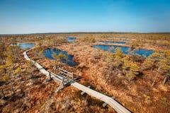 Duży bagien bagien Kemeri park narodowy, Latvia Zdjęcia Royalty Free
