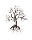 duży bezlistny drzewo Obraz Royalty Free