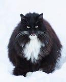 Duży czarny kot Obrazy Royalty Free