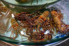 Duży czerwony homar fotografia royalty free