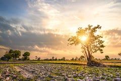 Duży drzewa i nieba zmierzch Zdjęcie Stock