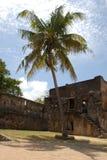 duży drzewko palmowe Obrazy Stock