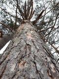 Duży drzewny widok od dna Zdjęcie Stock