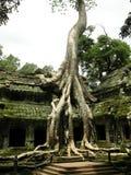 duży drzewo Obraz Royalty Free