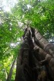 Duży drzewo. Zdjęcia Royalty Free