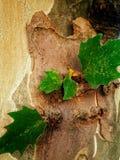 Duży drzewo 2 Fotografia Stock