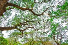 Duży drzewo Obrazy Stock