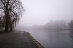 Duży drzewo blisko jeziora, regenci Parkuje, Londyn Zdjęcia Stock