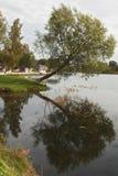 Duży drzewo na jeziorze Zdjęcia Royalty Free