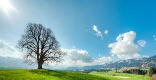 Duży drzewo na zielonym wzgórzu, niebieskim niebie, chmurach i górach, Obraz Royalty Free