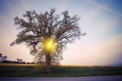 Duży drzewo nad zmierzchu niebem Obrazy Stock