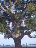 Duży drzewo schronieniem obraz stock