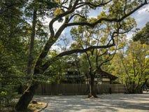 Duży drzewo w Ise Jingu Obraz Stock