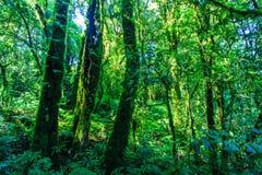 Duży drzewo w lesie Zdjęcia Stock