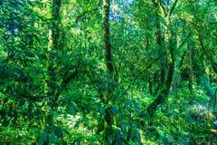 Duży drzewo w lesie Obraz Royalty Free