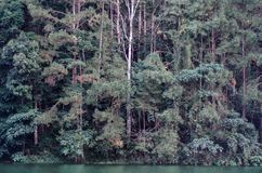 Du?y drzewo w lesie fotografia stock