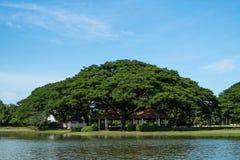 Duży drzewo w parku Zdjęcie Stock