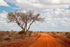 Duży drzewo w sawannie Kenja, czerwieni ziemia Fotografia Royalty Free