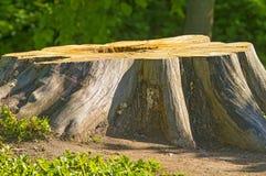 Duży fiszorek od starego drzewa Zdjęcia Stock