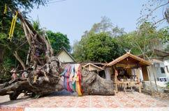 Duży hopea drzewo i spirytusowy dom Fotografia Royalty Free