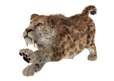 Duży kot Sabertooth Zdjęcia Stock