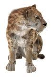 Duży kot Smilodon Obraz Stock
