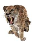 Duży kot Smilodon Obraz Royalty Free