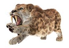 Duży kot Smilodon Obrazy Royalty Free