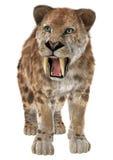 Duży kot Smilodon Zdjęcia Stock