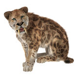 Duży kot Smilodon Fotografia Royalty Free
