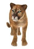 duży kota puma Fotografia Stock