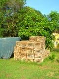 duży kukurydzani wyspy homara Nicaragua garnka oklepowie Fotografia Stock