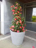 Duży kwiat fotografia stock