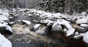 duży lasowa rzeczna zima Fotografia Royalty Free