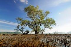 Duży mangrowe Zdjęcie Royalty Free