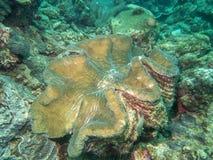Duży milczek na morzu Zdjęcia Royalty Free
