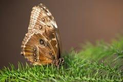 Duży motyl na drzewie Fotografia Stock